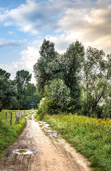 Wanderweg in Zons am Rhein nahe Hotel zum bergischen Hof